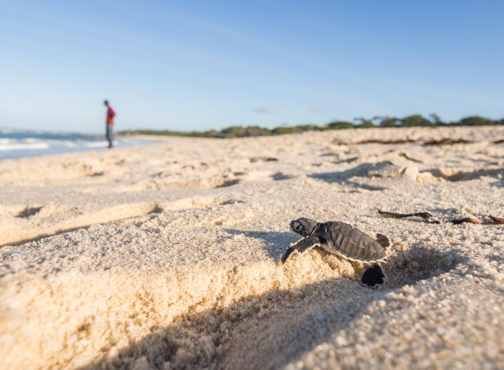 Пляж черепах в Пафосе