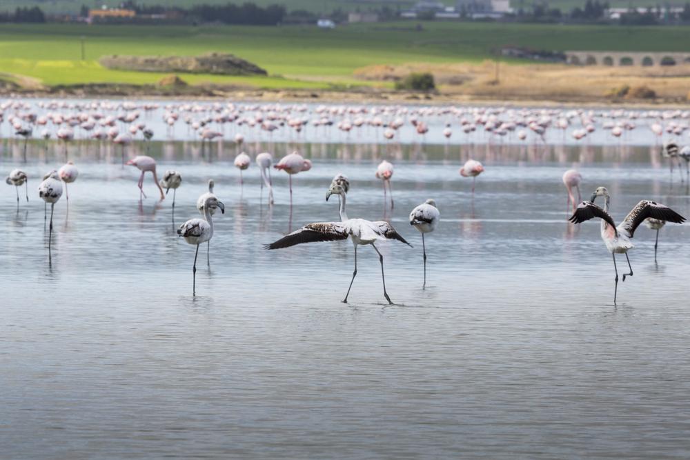 Соляное озеро в Ларнаке